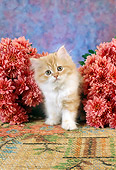 CAT 03 RC0096 01