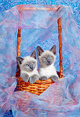 CAT 03 RC0100 01