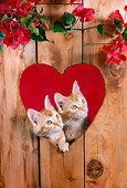 CAT 03 RC0107 01
