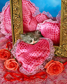 CAT 03 RC0110 01
