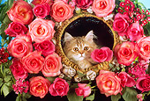 CAT 03 RC0113 01