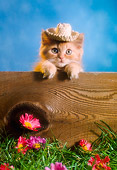 CAT 03 RC0114 01