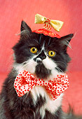 CAT 03 RC0115 01