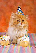 CAT 03 RC0117 01