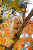 CAT 03 RC0119 01