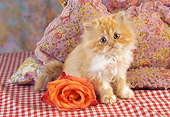 CAT 03 RC0121 01