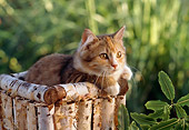 CAT 03 RC0125 01