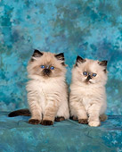 CAT 03 RK0014 02