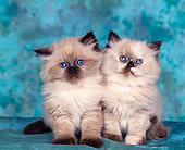 CAT 03 RK0015 02