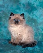 CAT 03 RK0016 08