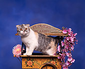 CAT 03 RK0075 02