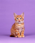 CAT 03 RK0125 06