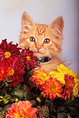 CAT 03 RK0165 05