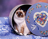 CAT 03 RK0218 01
