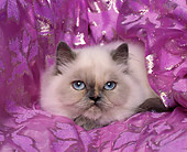 CAT 03 RK0238 04