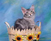 CAT 03 RK0240 01