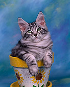 CAT 03 RK0244 07