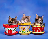 CAT 03 RK0248 06