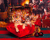 CAT 03 RK0249 01