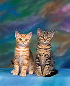 CAT 03 RK0301 03