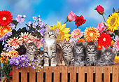 CAT 03 RK0307 20