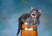 CAT 03 RK0315 01