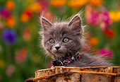 CAT 03 RK0381 11