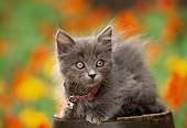 CAT 03 RK0390 03