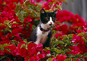CAT 03 RK0394 01