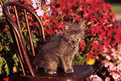 CAT 03 RK0404 02