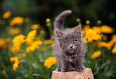 CAT 03 RK0405 09