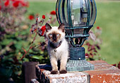 CAT 03 RK0441 04
