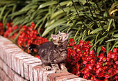 CAT 03 RK0442 05