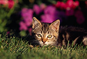 CAT 03 RK0444 04