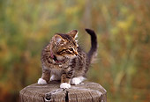CAT 03 RK0453 02