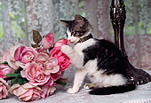 CAT 03 RK0476 01