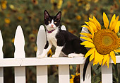 CAT 03 RK0491 07