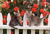 CAT 03 RK0512 04