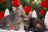 CAT 03 RK0512 25