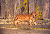 CAT 03 RK0518 02