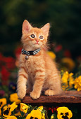 CAT 03 RK0534 03
