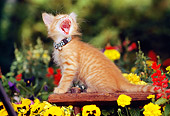 CAT 03 RK0536 02