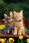 CAT 03 RK0540 10