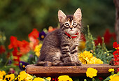CAT 03 RK0542 01