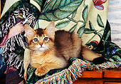 CAT 03 RK0583 02