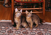 CAT 03 RK0599 01
