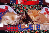 CAT 03 RK0647 01