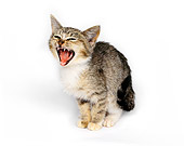 CAT 03 RK0663 01