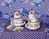 CAT 03 RK0671 08