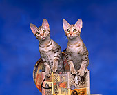 CAT 03 RK0678 05